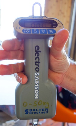 Electro-Samson Hanging Scale