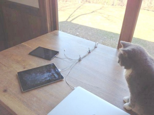 cable-control-cat