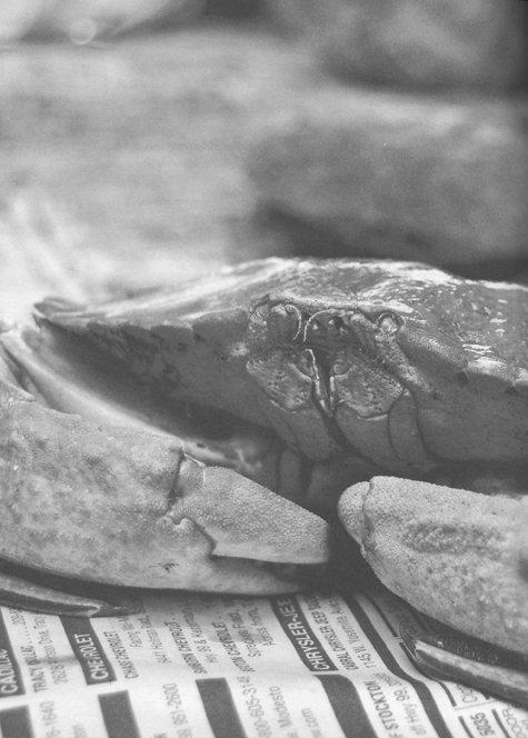 hunt-gather-cook1sm